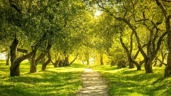 bigstock-Sunlight-in-the-green-forest--55933313